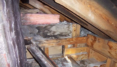 Attic Soffit Ventilation Installation In New Jersey Jun 39 S Mold Remediation