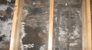 roof_mold_remediation