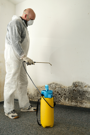 Middlesex County Basement Mold Removal