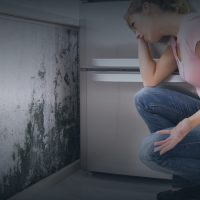 Berkeley Heights Mold Remediation