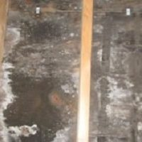 Cranford Mold Remediation