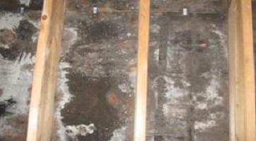 Cranford Mold Remediation