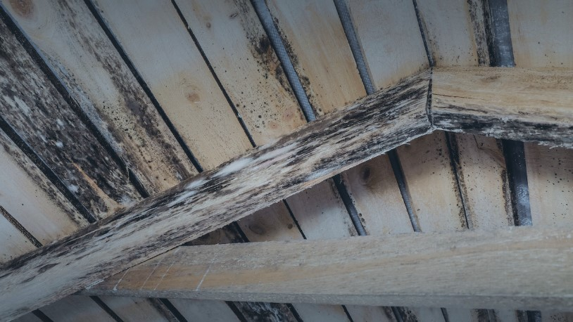 Middlesex County Attic Mold Removal