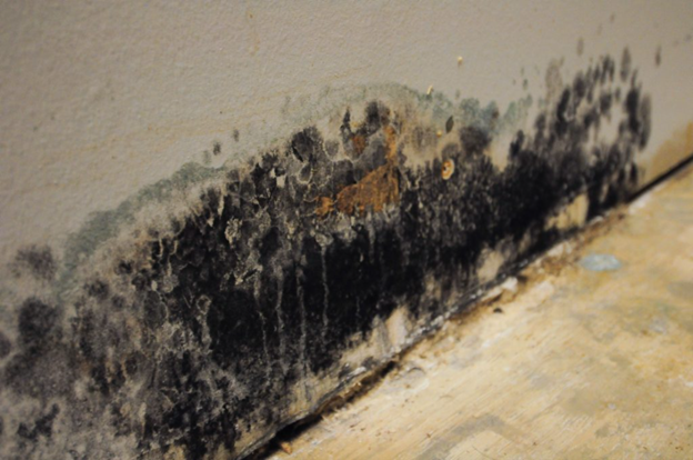 Hudson County Basement Mold