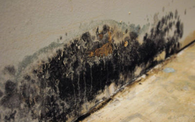 Hudson County Mold Remediation