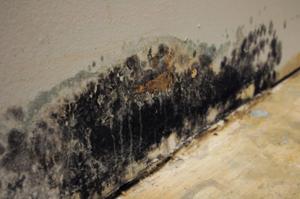 Mold Removal in Hudson County